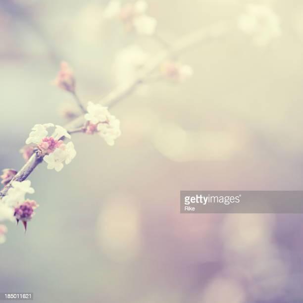 Petites fleurs en hiver