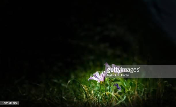 little flowers - kubacki stock photos and pictures