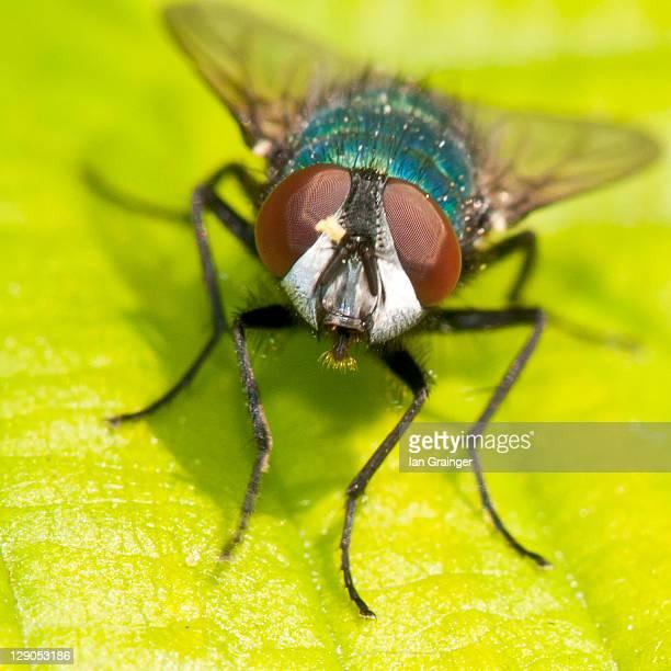 Little fly