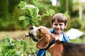 little gardener his dog