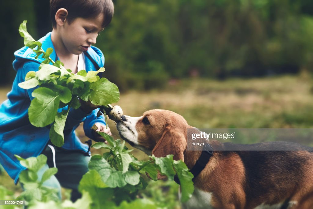 Little gardener and his dog : Stock Photo