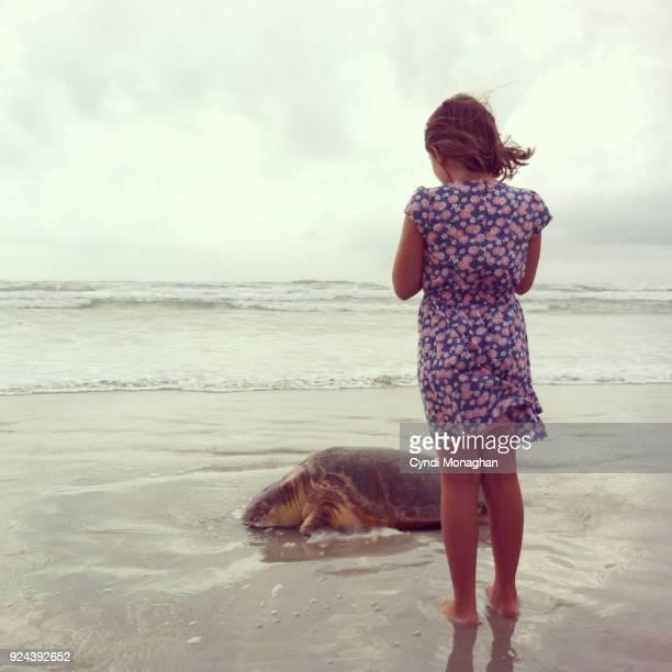 little girl and a dead sea turtle - dead girl imagens e fotografias de stock