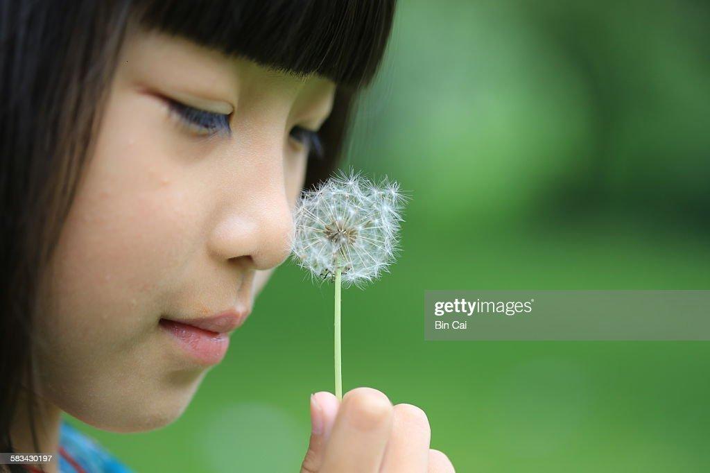 Little girl and dandelion : Stock Photo