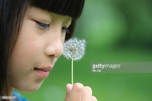 little girl and dandelion - feuille de pissenlit photos et images de collection