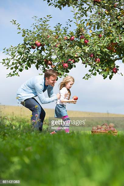 Little girl and father picking apples from tree
