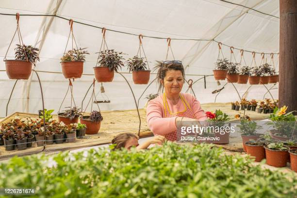 little girl and her aunt taking care of flowers in the greenhouse - dusan stankovic stock pictures, royalty-free photos & images