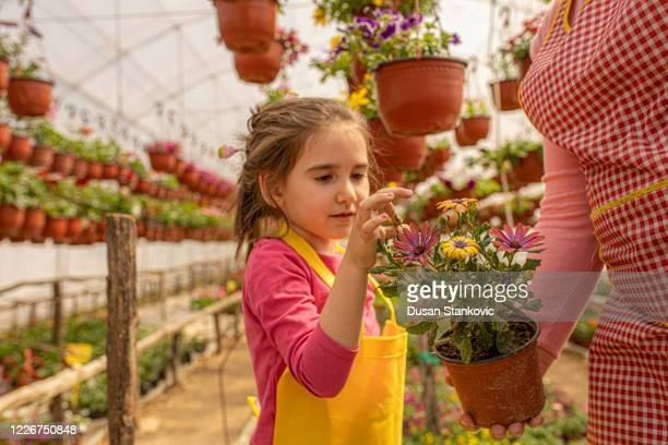 little girl and her auntie planting flowers in the greenhouse - dusan stankovic stock pictures, royalty-free photos & images