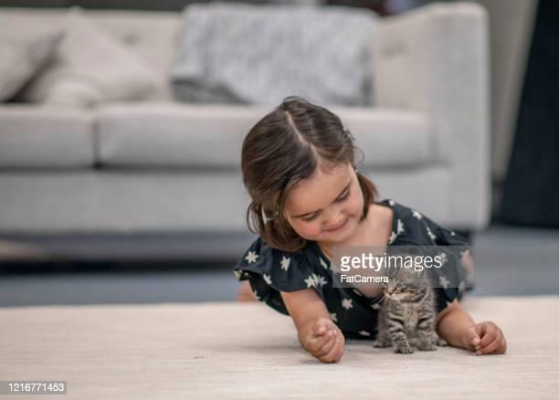 little girl and her kittens. - gattini appena nati foto e immagini stock