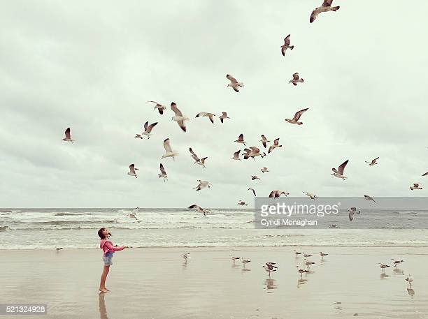 Little Girl and Seagulls