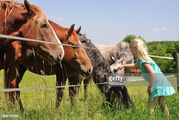 Little girl at the horses