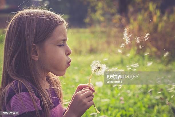 Little girl blowing blowball