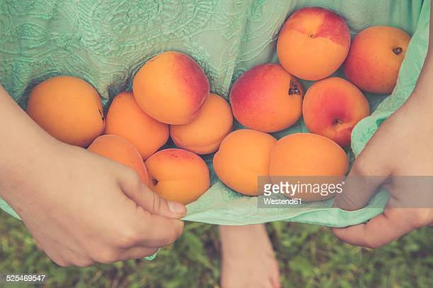 Little girl carrying apricots with her dress, partial view