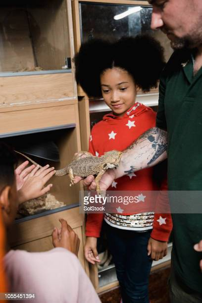 little girl fascinated by the bearded dragon - exotic pets stock pictures, royalty-free photos & images