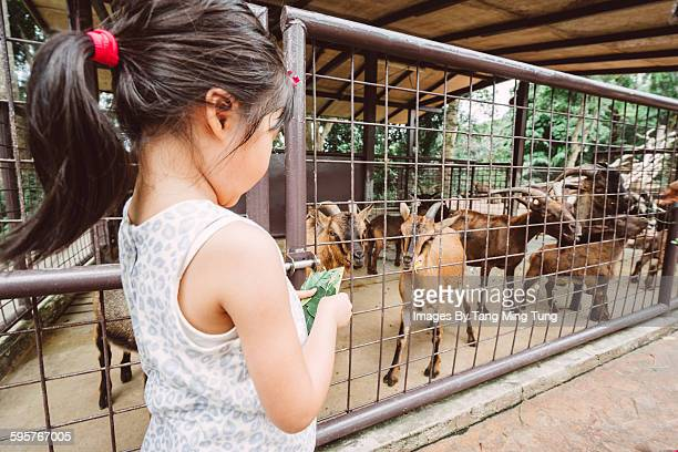 Little girl feeding animals in the zoo