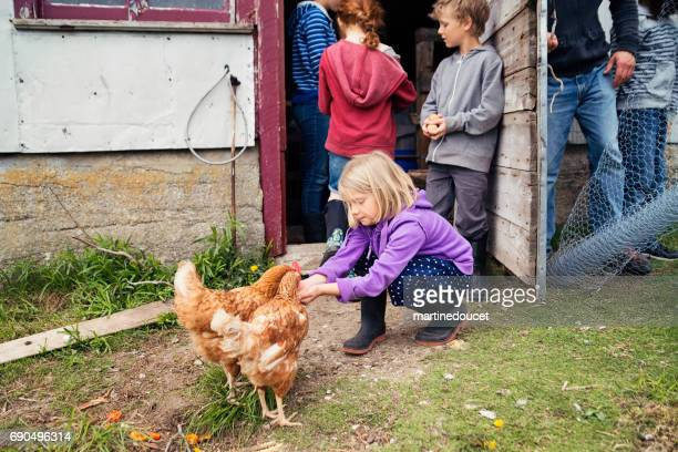 Little girl feeding hens in the small family chicken coop.