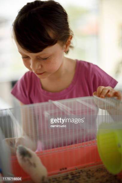 little girl feeding her hamster - damircudic stock photos and pictures