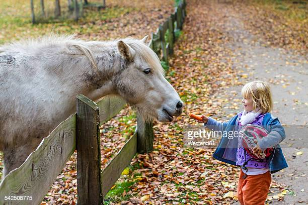 Little girl feeding horse
