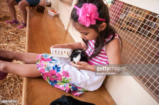 Little girl feeds a guinea pig at a petting zoo