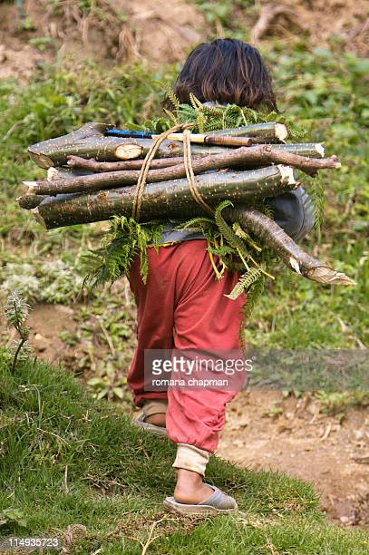 Little girl fetching fire wood