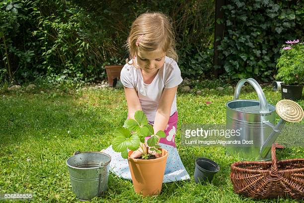 little girl gardening, potting a plant - alexandra dost stock-fotos und bilder