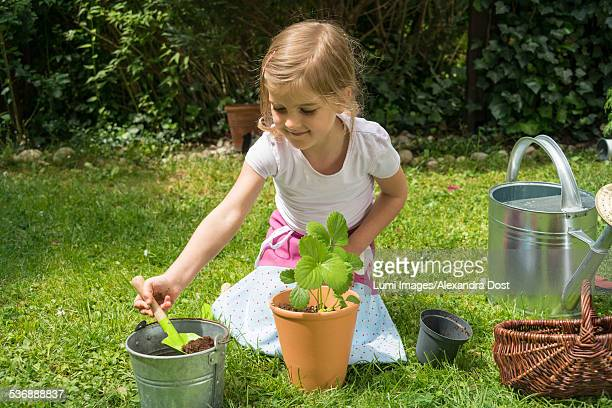 little girl gardening, potting plants with care - alexandra dost stock-fotos und bilder