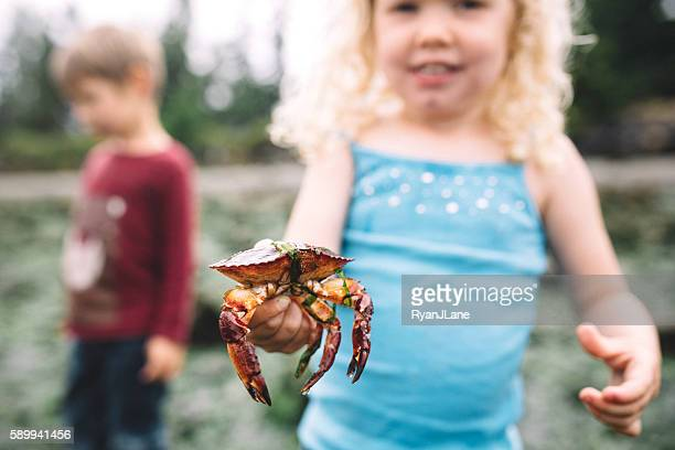 little girl holding a crab - puget sound stock pictures, royalty-free photos & images