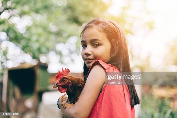 little girl holding a hen - chicken bird stock photos and pictures