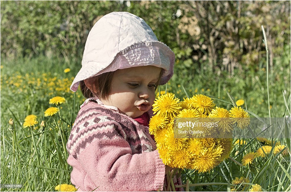 Little girl holding dandelions : Stock Photo
