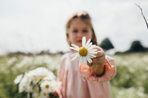 Little girl holding picked chamomile, close-up - gettyimageskorea