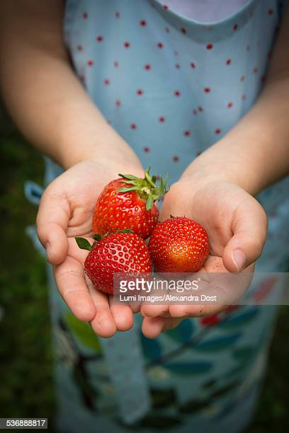 Little girl holding strawberries in her hands, close-up