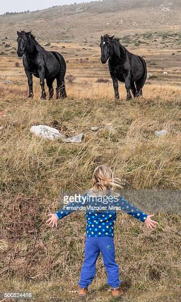 little girl hypnotizing two huge black horses - girl blowing horse - fotografias e filmes do acervo