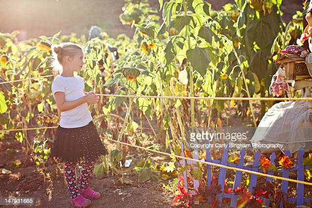 Little girl in corn field with scarecrows