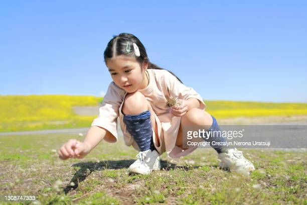 little girl in nature with rape blossoms - 茨城県 ストックフォトと画像