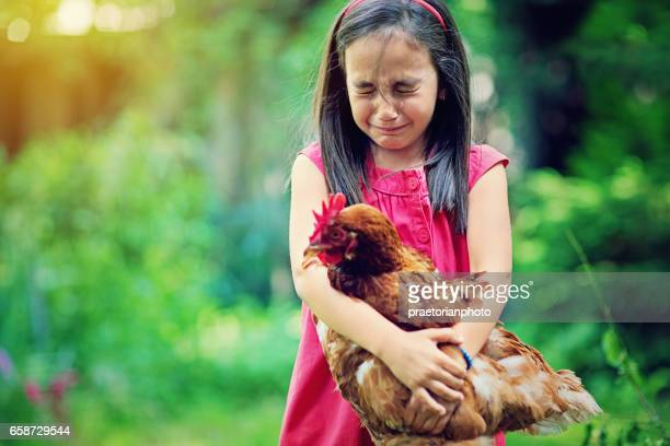 Little girl is crying till holding hen in the farm
