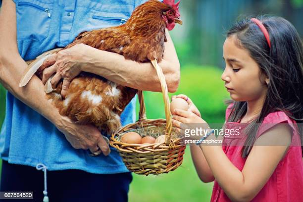 Little girl is taking fresh egg from a basket