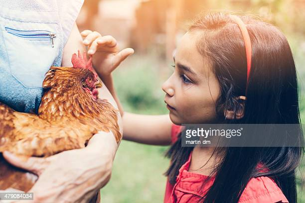 Little girl looking at a hen