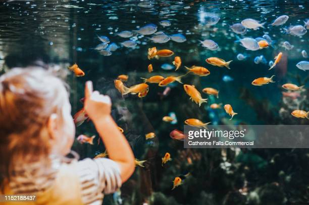 little girl looking at fish - bottomless girl stock pictures, royalty-free photos & images