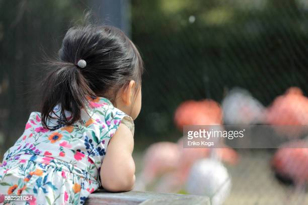 little girl looking at flamingos at zoo - 動物園 ストックフォトと画像