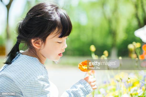 little girl looking at flower - innocence stock pictures, royalty-free photos & images