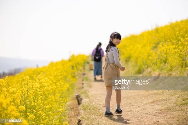 油糧種子の菜の花畑で肩を見ている少女 - 千葉県 ストックフォトと画像