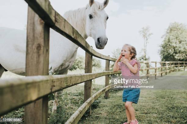 little girl looks at a horse and giggles in awe - paardrijden stockfoto's en -beelden