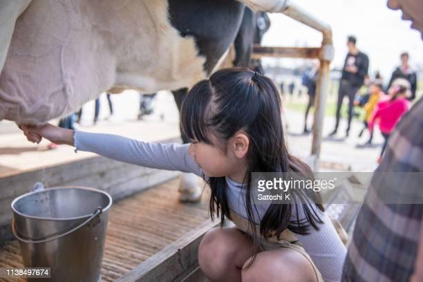 農場で小さな女の子マイキング - milking farm ストックフォトと画像