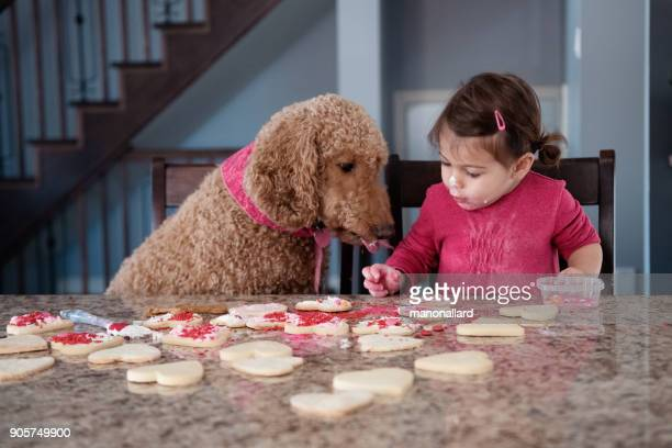 little girl of 2-3 years old taste cookies heart shape with her dog during valentine's day - valentine's day holiday stock pictures, royalty-free photos & images