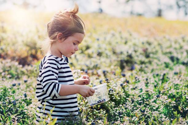 小女孩採摘藍莓 - 藍莓 個照片及圖片檔