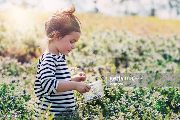 little girl picking blueberries - uncultivated stock pictures, royalty-free photos & images