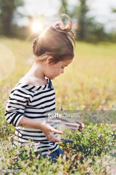 Kleine Mädchen pflücken Blaubeeren