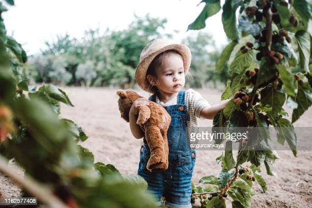 little girl picking fresh ripe mulberry - mulberry tree stock pictures, royalty-free photos & images