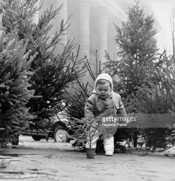 Little Girl Christmas Tree: A Little Girl Picking Her Christmas Tree At The Flower