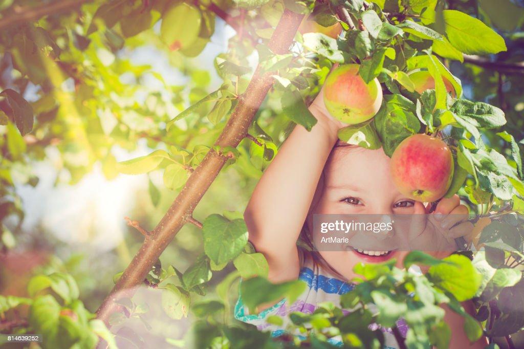 Meisje oppakken van appels : Stockfoto
