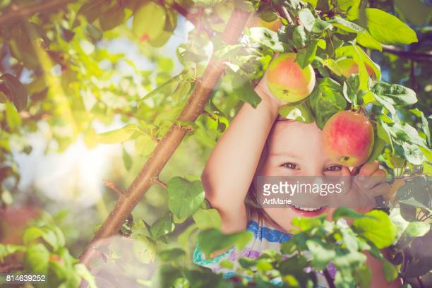 Little girl picking up apples